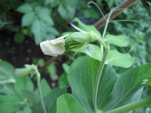 Schneider-garden_produce-02